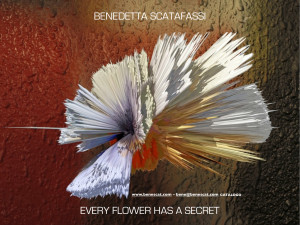 COVER CATALOGO EVERY FLOWER HAS A SECRET